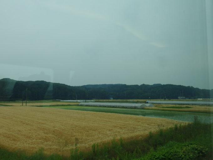 栃木の車窓黄金色の麦畑と植えたばかりの水田のコントラスト
