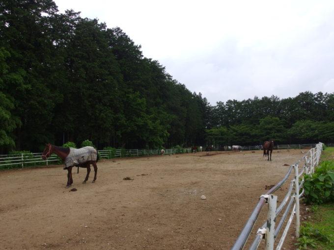 西那須野ホウライ千本松牧場の馬
