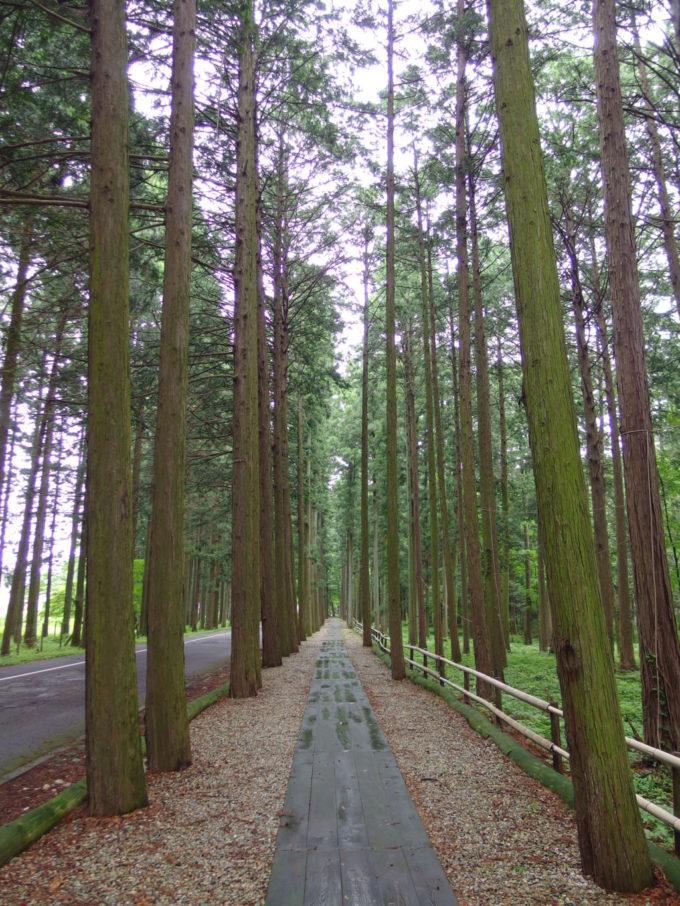 西那須野ホウライ千本松牧場放牧場へ続く杉並木