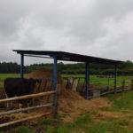 西那須野ホウライ千本松牧場草を食む牛と広大な牧草地