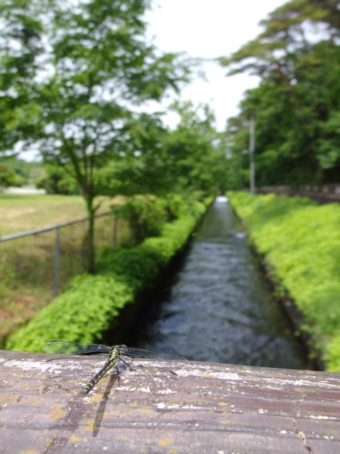 日本三大疎水那須疎水ととんぼ