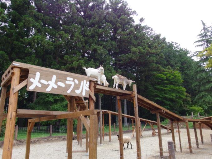 西那須野ホウライ千本松牧場メーメーランドのヤギ