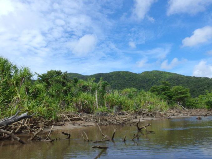 石垣島仲間川上流の熱帯性植物