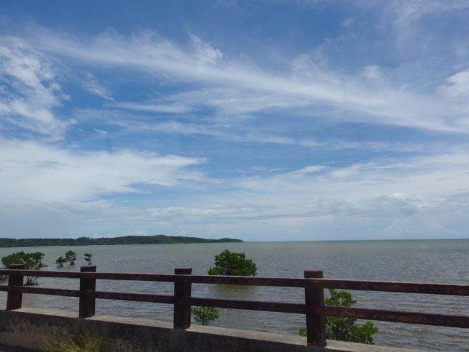 西表島水没するマングローブ