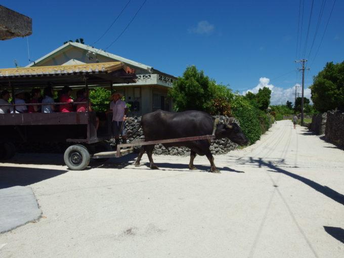 遠くから三線の音を響かせてやってくる竹富島の水牛車
