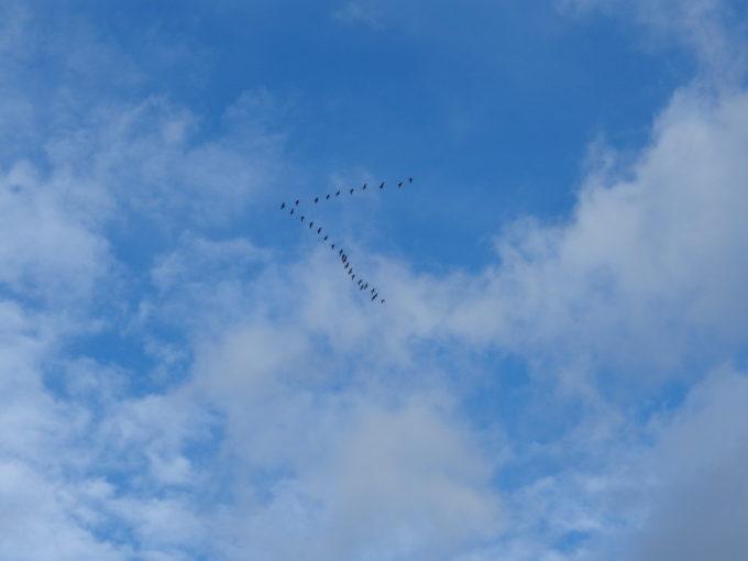 盛岡の秋空を飛ぶ渡り鳥の編隊