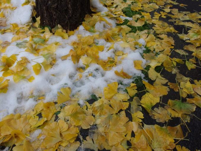 早い雪に彩られる銀杏の落葉