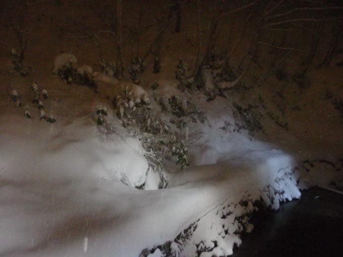 夜更けの酸ヶ湯初冬の雪景色