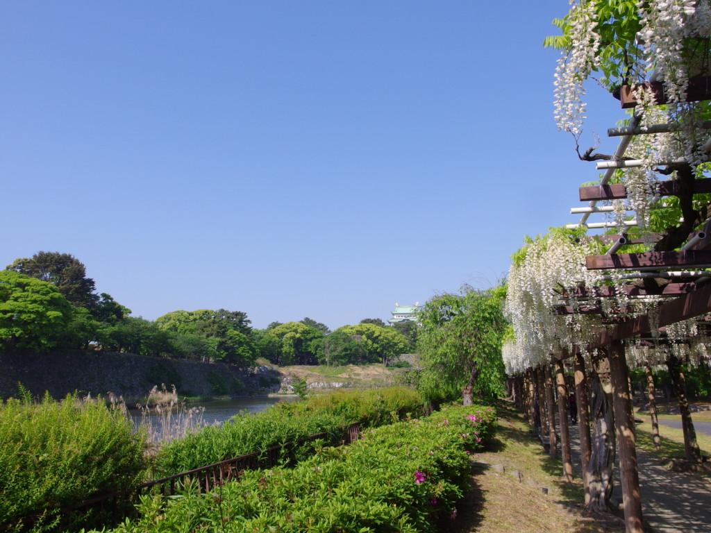 名古屋城お堀と見事な藤棚