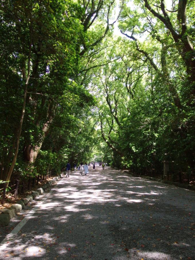 初夏の新緑に覆われた熱田神宮参道