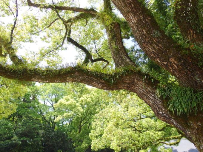 緑一色に染まるゴールデンウィークの熱田神宮
