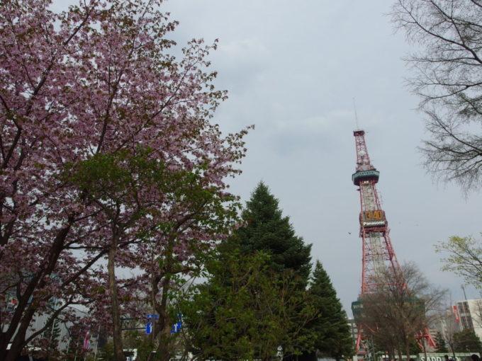 大通り公園の桜と札幌テレビ塔