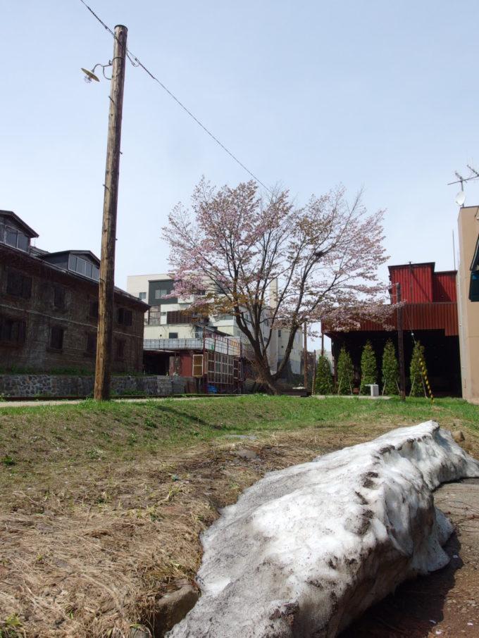 ゴールデンウィークの旧国鉄手宮線廃線跡線路脇の残雪と散り始めの桜