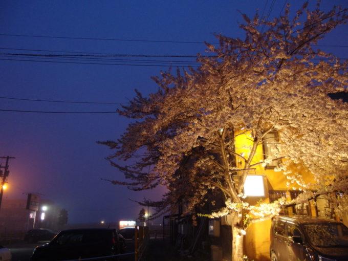 夜霧に浮かぶ小樽の桜