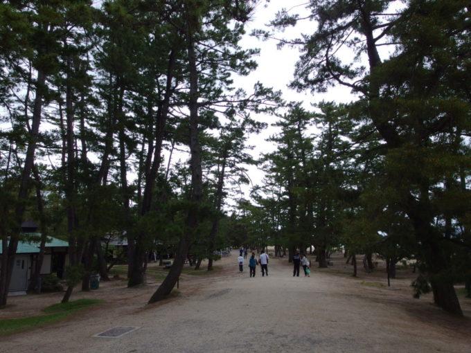 日本三景天橋立砂地と松に覆われる大天橋