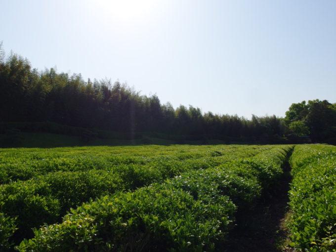 日本三名園後楽園藩主が飲むお茶を栽培していたという茶畑