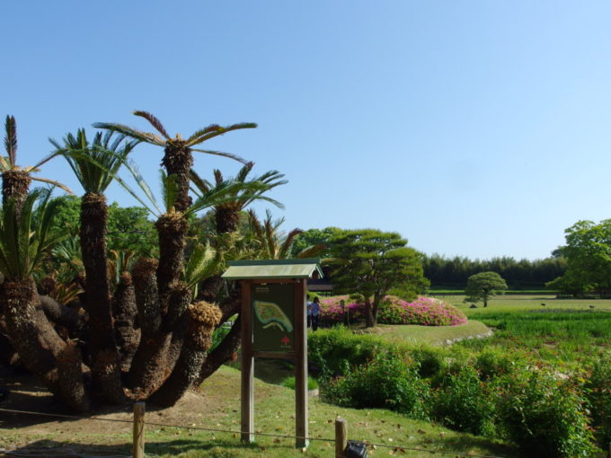 日本三名園後楽園回遊式庭園に南国情緒を添える蘇鉄の木