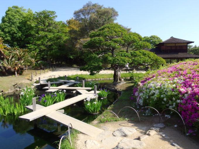 日本三名園後楽園八橋の架かる花菖蒲畑と咲き乱れる紅白のつつじ