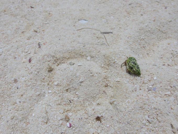 夏の竹富島コンドイビーチオリオンビール片手に歩くヤドカリを眺める