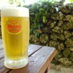 竹富島そば処竹乃子テラス席で飲むオリオン生ビールジョッキ