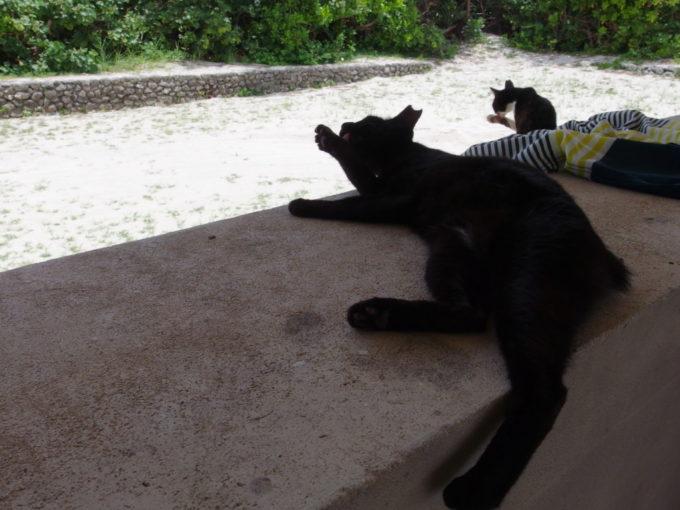 夏の竹富島コンドイビーチで毛繕いする2匹の猫