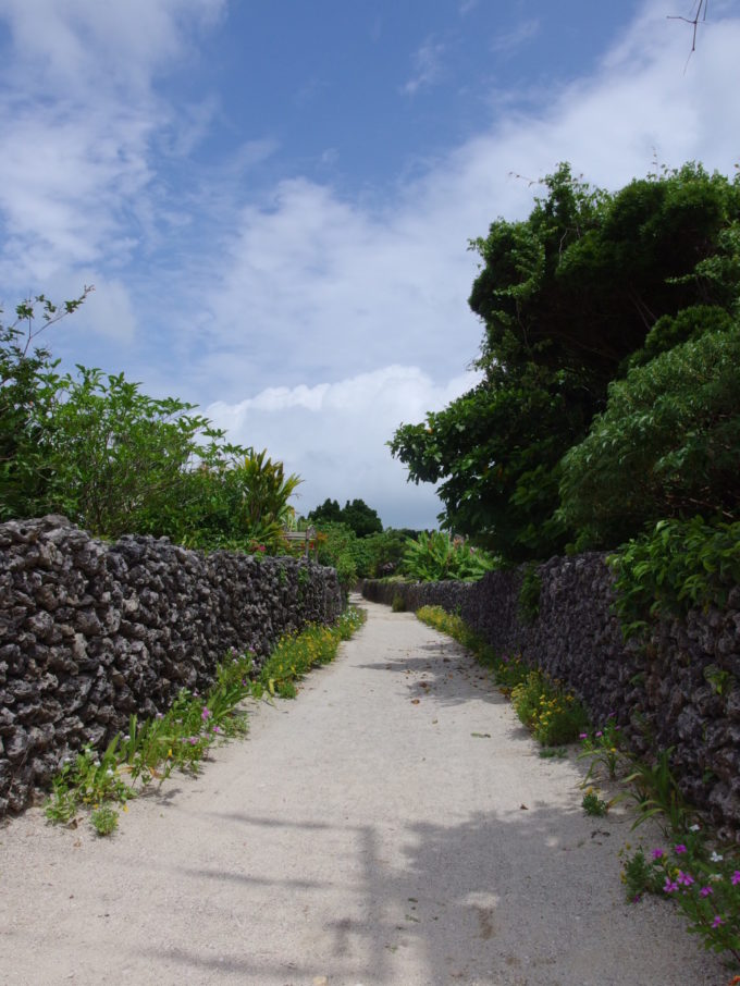 夏の竹富島青空に映える珊瑚の石垣と深い緑