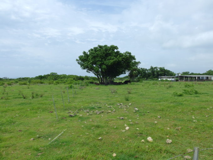 時の止まった島、竹富島。