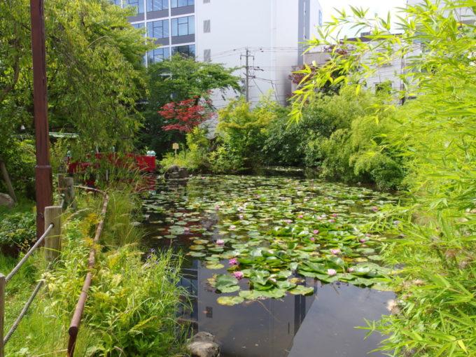夏の青森善知鳥神社蓮の花咲くうとう沼
