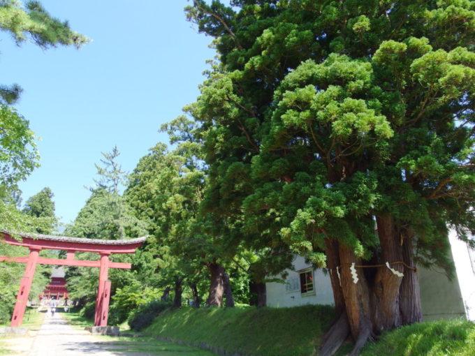 岩木山神社の御神木五本杉