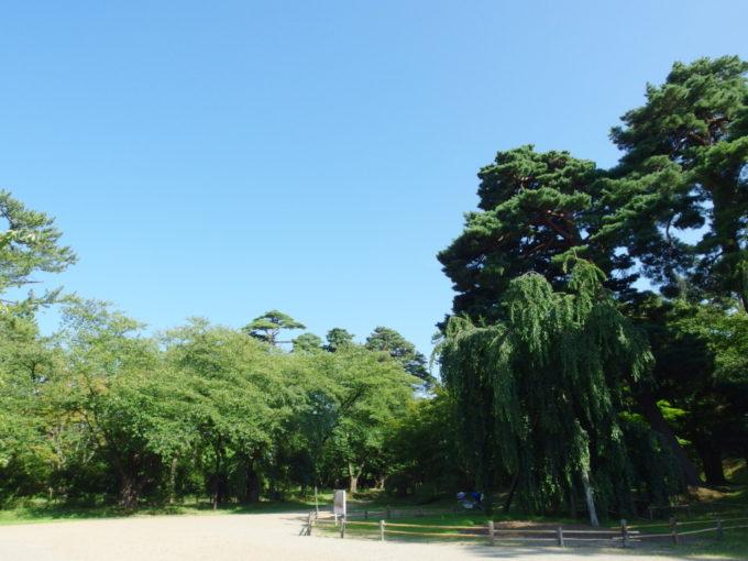 夏の弘前公園立派な枝垂れ桜