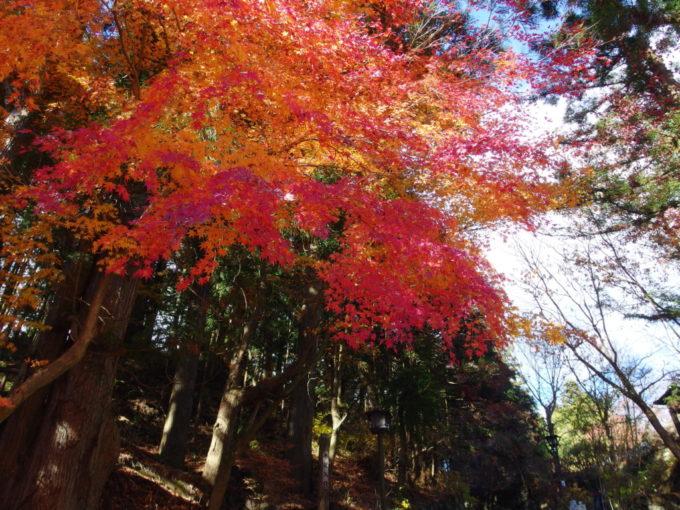 晩秋の日光輪王寺参道入口にたつ鮮やかな紅葉