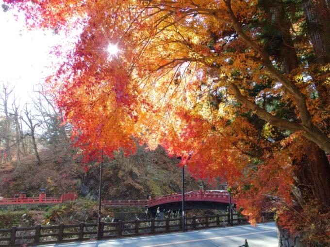 日差しに透かされた紅葉と神橋の競演