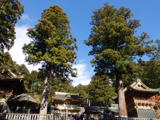 晩秋の青空に映える杉の大木と陽明門