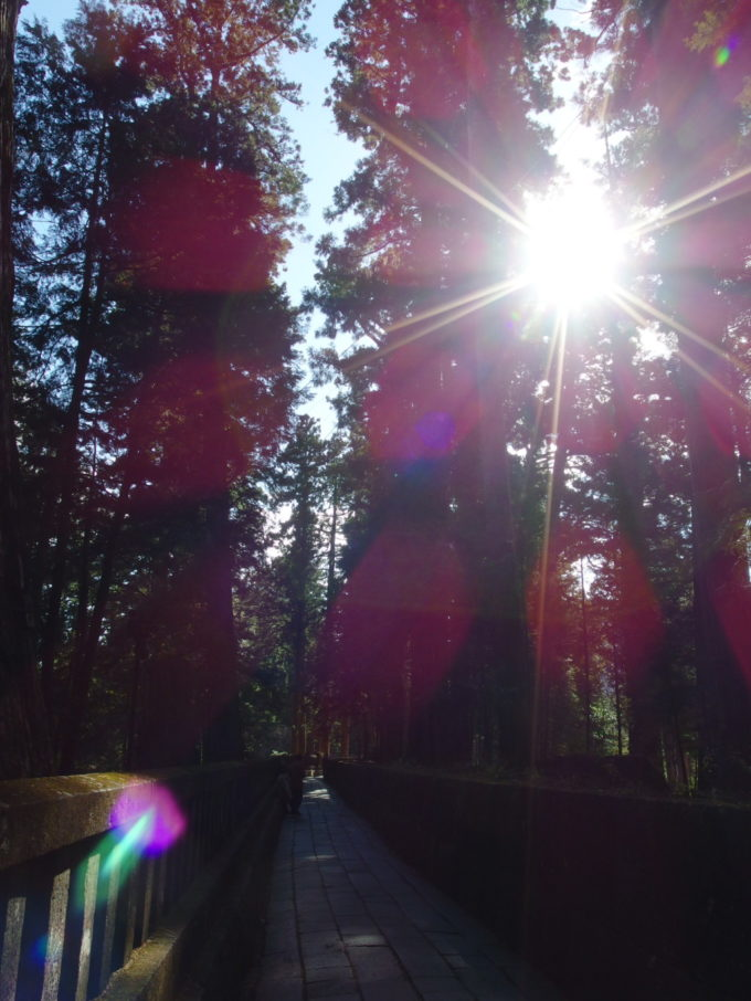日光東照宮奥宮の参道を照らす杉の木立越しの秋の日差し