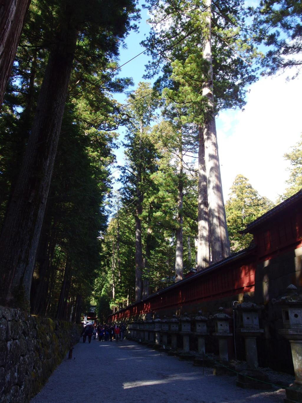 晩秋の日光二荒山神社へと続く参道