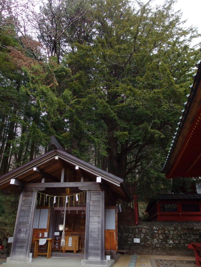 初冬の日光中禅寺湖二荒山神社中宮祠推定樹齢1100年以上のいちいの木