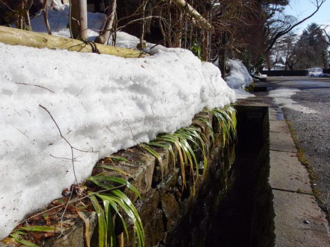 冬の角館雪解けに濡れるよう水路沿いの緑
