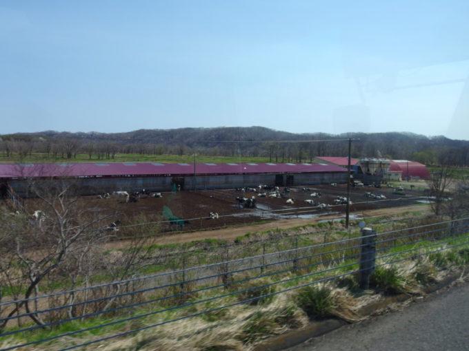 道南バス高速エアポート号車窓から望む乳牛たち