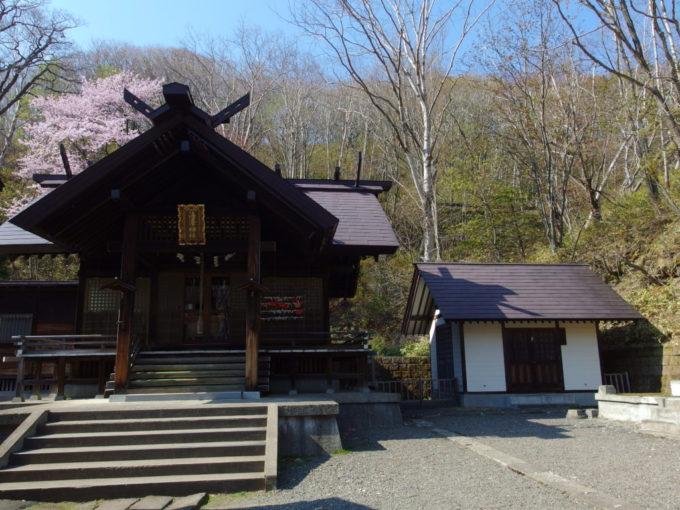 登別温泉湯澤神社本殿を彩る満開の桜