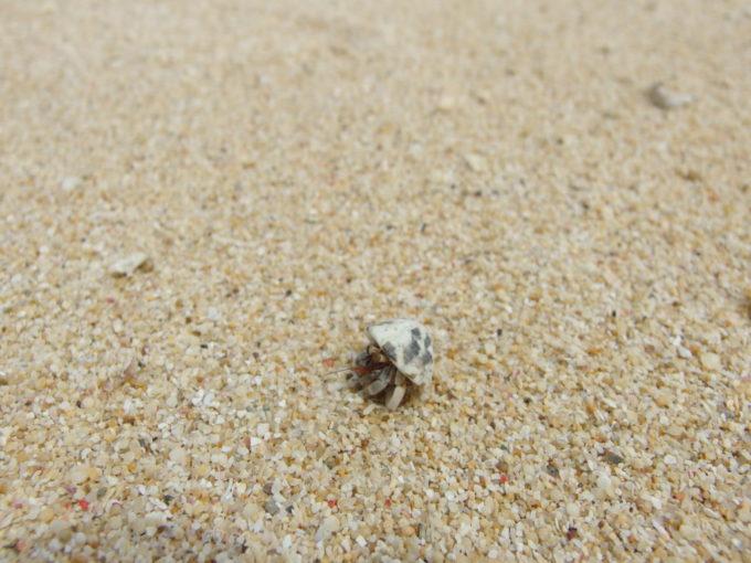 夏の石垣島晴れ間が出た真栄里ビーチを嬉しそうに歩くヤドカリ
