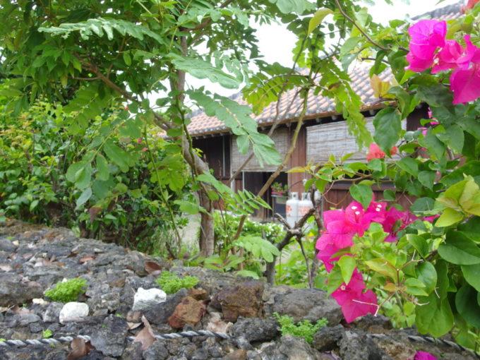 夏の竹富島集落を彩るブーゲンビリア