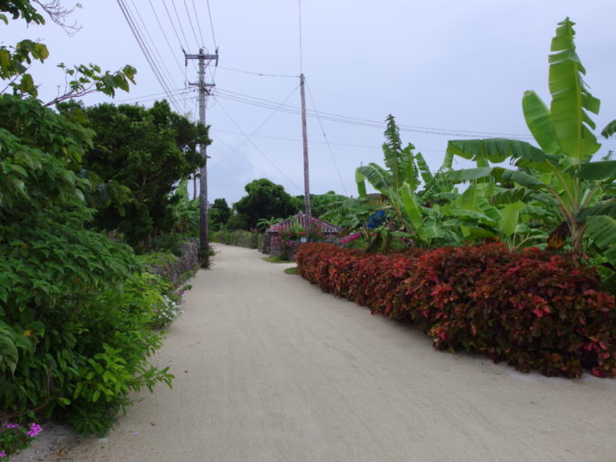 夏の竹富島集落を彩る元気な草花
