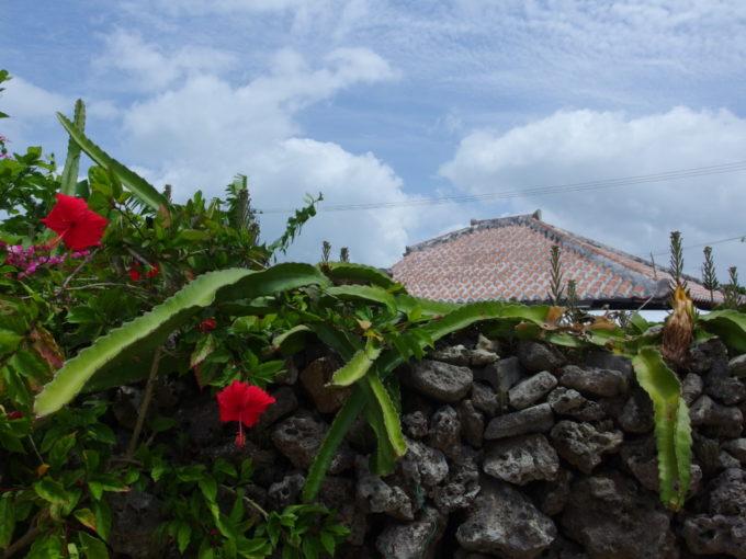 夏の石垣島竹富島石垣に咲くハイビスカスと象徴である赤瓦
