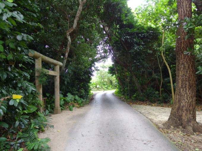 夏の石垣島竹富島集落を出る緑深い道
