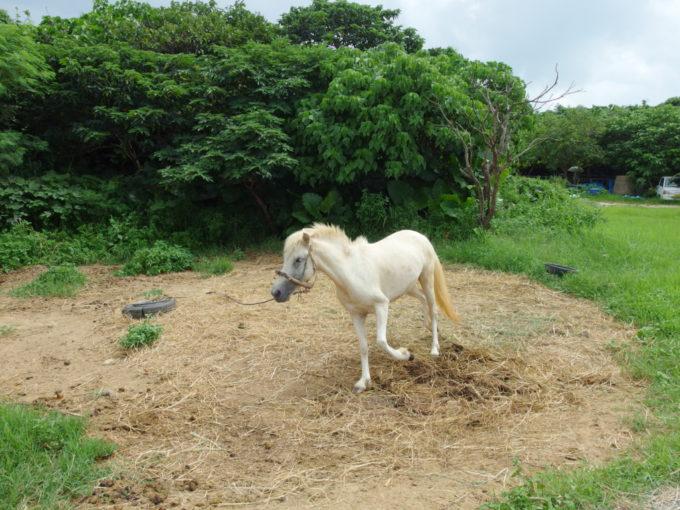 夏の石垣島竹富島滾る白い馬