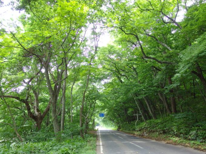 夏の青森豊かな緑の中歩く国道103号線