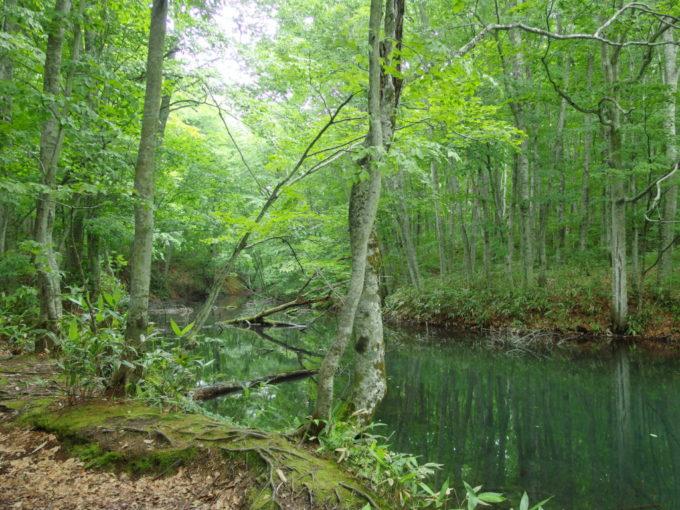 夏の青森蔦沼遊歩道脇に現れる小さな沼