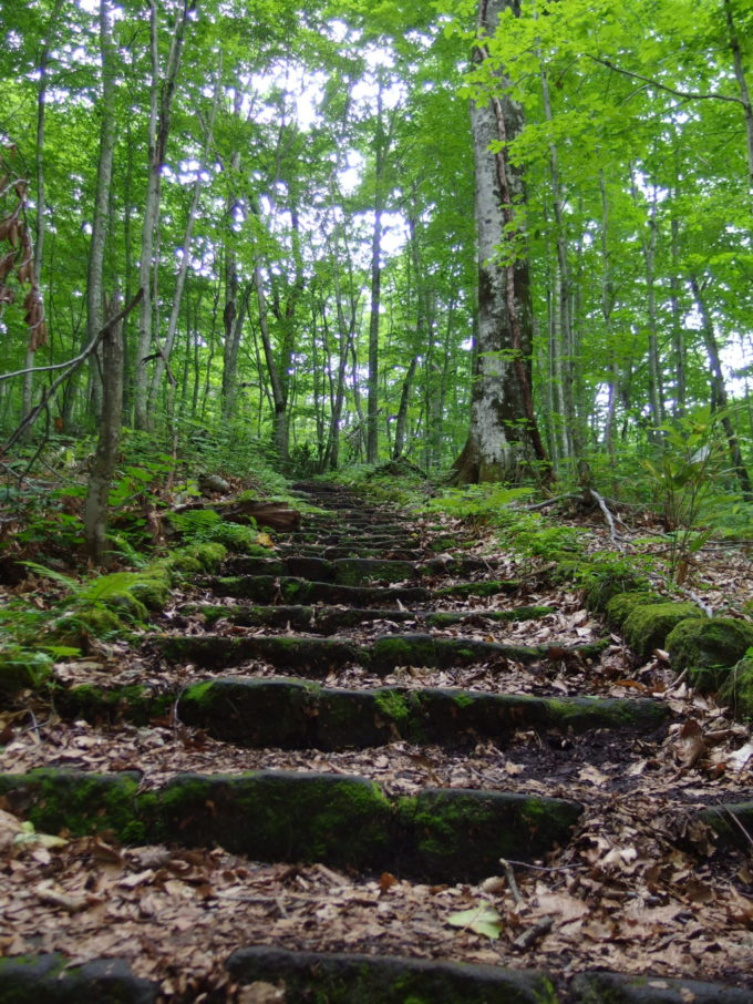 夏の青森蔦沼遊歩道苔と木々に覆われた緑の石段