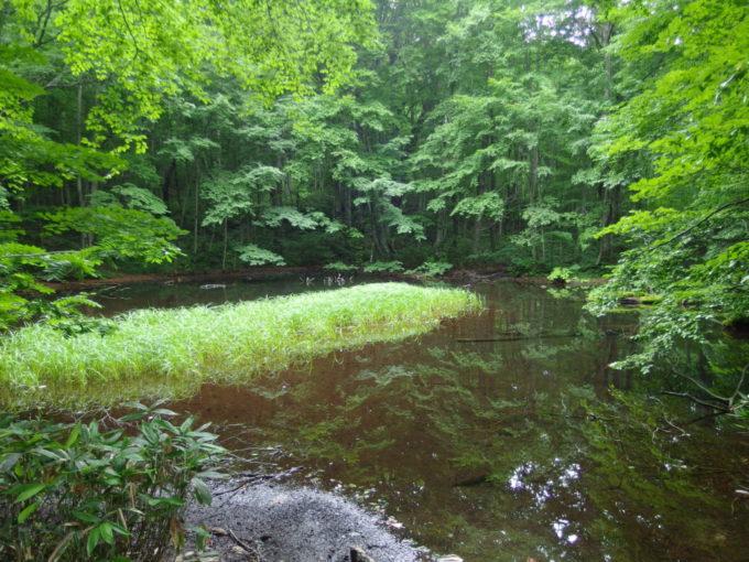夏の青森蔦沼遊歩道人工の鏡沼