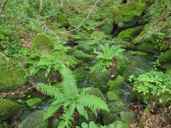 夏の青森蔦沼遊歩道苔むした岩の間を流れる清冽な水